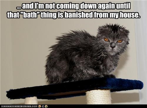 angry banished bath caption captioned cat not coming down wet - 3907676672