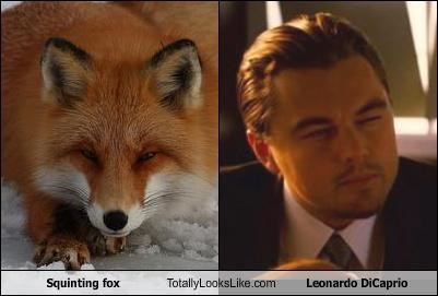 leonardo dicaprio,squinting fox