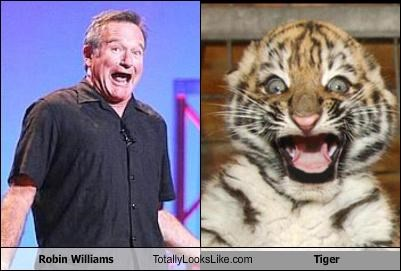 actor animals robin williams tiger