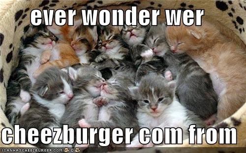 Cheezburger Image 3907897856