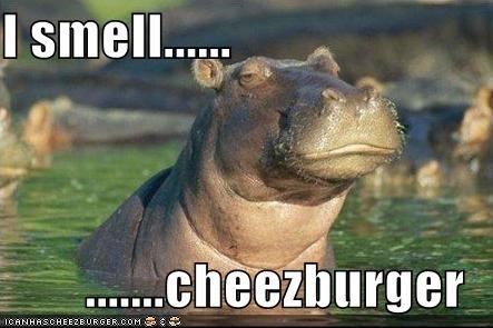 Cheezburger Image 3907915520