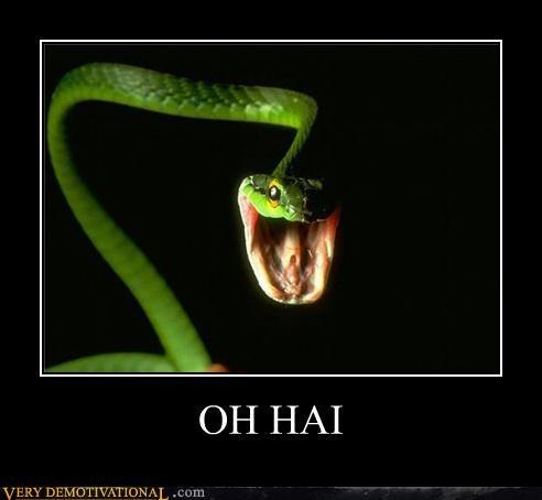 hello wtf animals snake - 3908309504