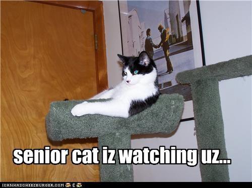 senior cat iz watching uz...