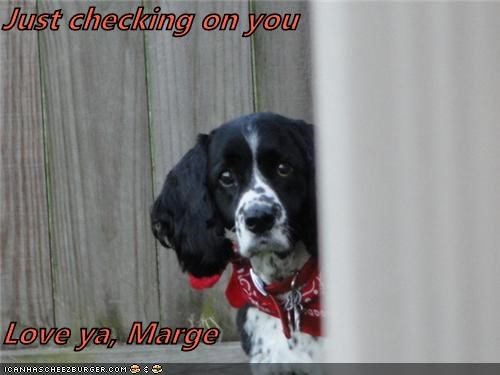 Just Checking On You Love Ya Marge Cheezburger Funny Memes Funny Pictures