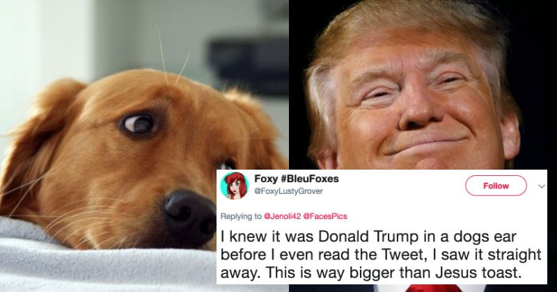 People on Twitter are trolling Donald Trump after discovering the inside of a dog's ear looks just like him.