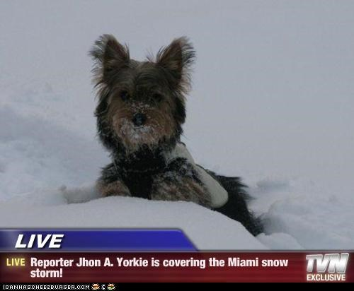 Live Reporter Jhon A Yorkie Is Covering The Miami Snow Storm I
