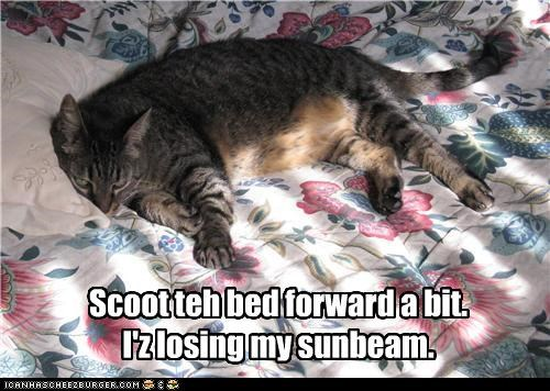 adjustment,bed,caption,cat,Scoot,sleeping,sunbeam