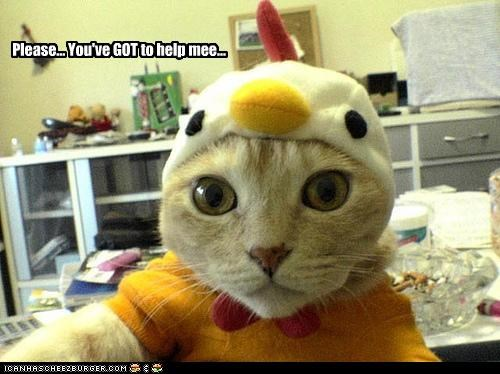 caption,cat,chicken,costume,help,please