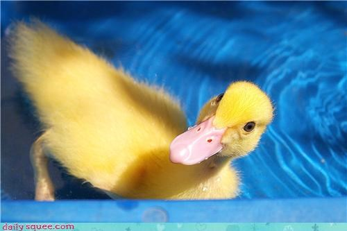 duck floof Fluffy - 3910544128