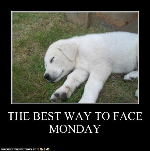 coping,cute,Hall of Fame,monday,puppy,sleeping,the best way,whatbreed