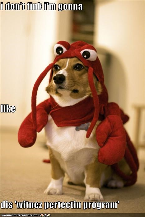 change,corgi,costume,dislike,identity,lobster,witness protection program