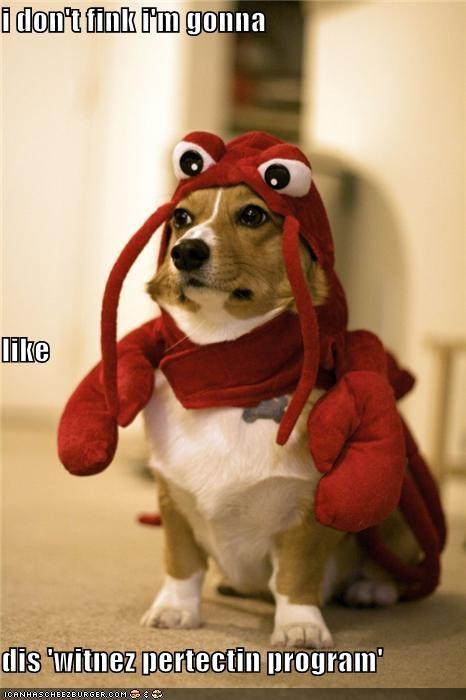 change corgi costume dislike identity lobster witness protection program - 3910947328
