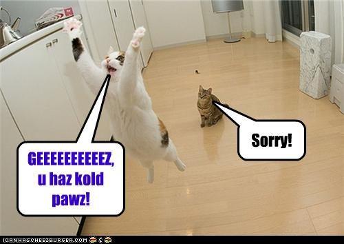 GEEEEEEEEEEZ, u haz kold pawz! Sorry!