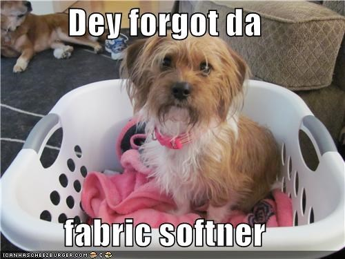 fabric softener forgetting laundry Sad silky terrier - 3911897856
