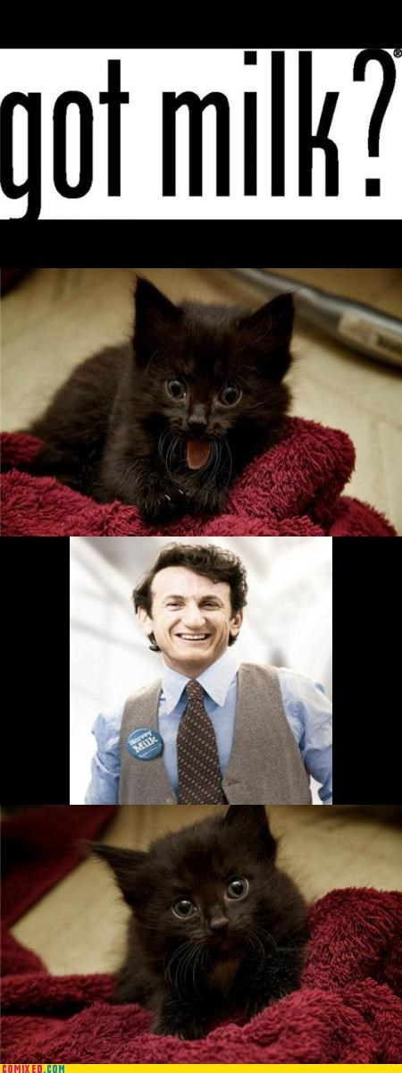 animals,celebutard,history,milk,movies,puns,Sean Penn