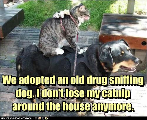We adopted an old drug sniffing dog. I don't lose my catnip around the house anymore. We adopted an old drug sniffing dog. I don't lose my catnip around the house anymore.