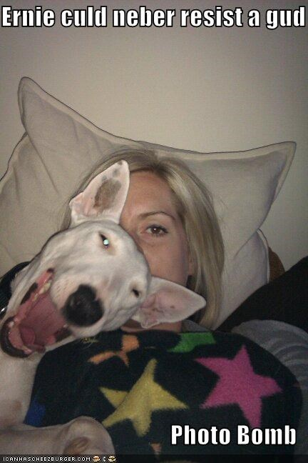 bull terrier,happy dog,photobomb,picture,smiles