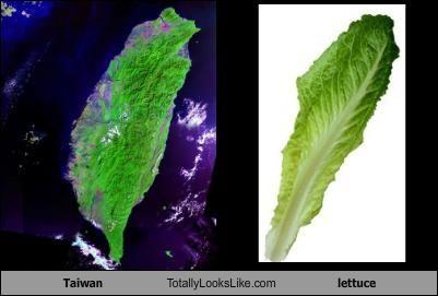lettuce,Taiwan