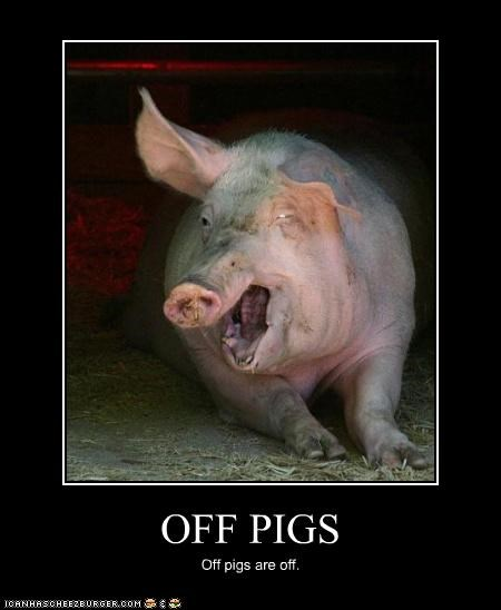 OFF PIGS Off pigs are off.