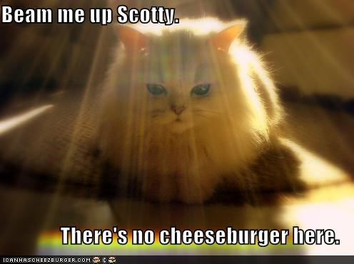 beam me up,caption,cat,cheeseburger,light,scotty,searching,Star Trek