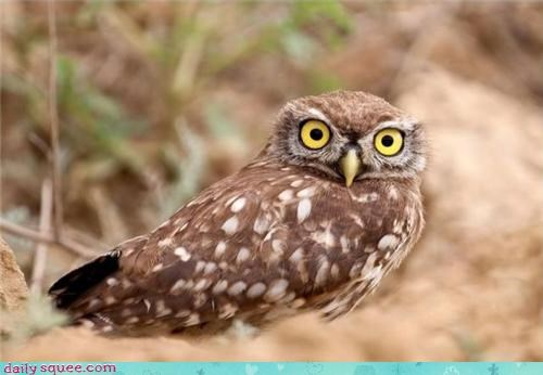 bird face nerd jokes Owl - 3916802048