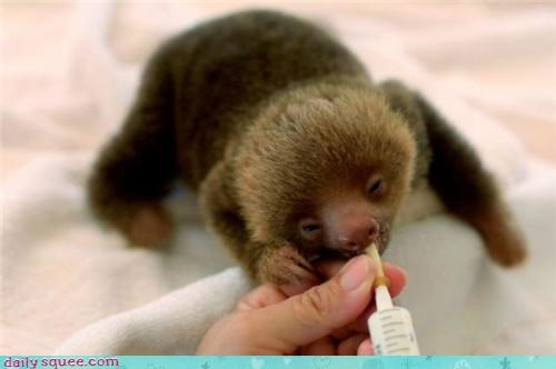 noms,sleepy,sloth