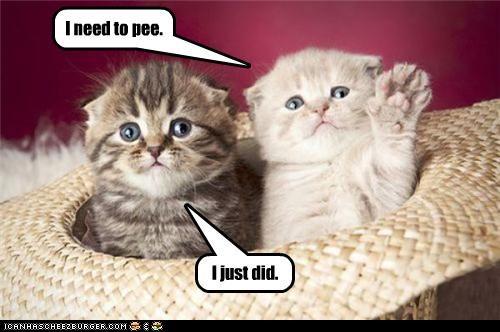 accident already did caption hat kitten need pee - 3916864768