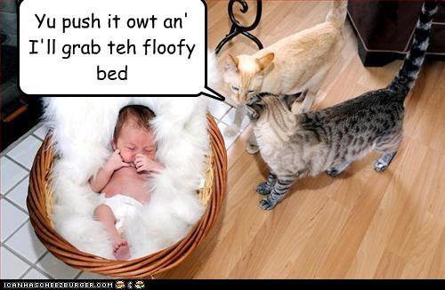 baby,bed,caption,Cats,evil,Fluffy,push,removal