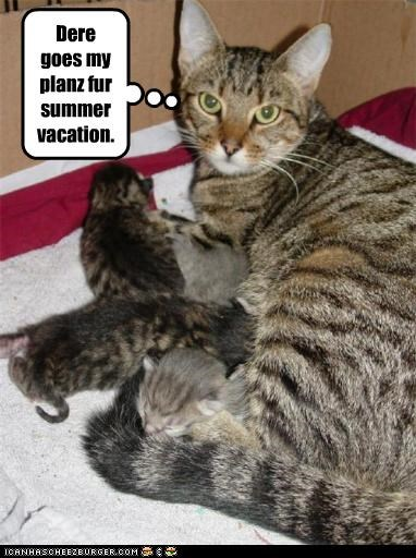 caption cat feeding kitten mom plans ruined - 3916986112