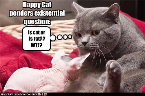 Happy Cat ponders existential question: Is cat or is rat?? WTF?