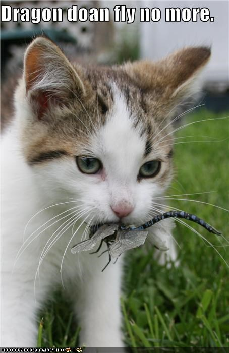 caption cat dragon dragonfly eated fly not anymore - 3917912064