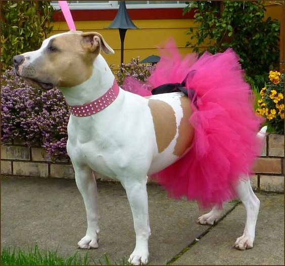 a list of animals in tutus