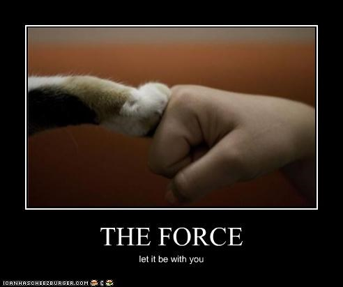 caption,cat,fist bump,i haz it,paw,the force