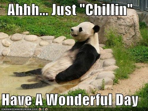 Cheezburger Image 3920342016