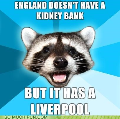advice dog,beatles,kidney bank,liverpool,meme,puncoon,puns,raccoon