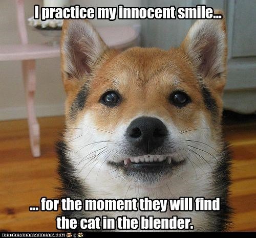 I practice my innocent smile... ... for the moment they will find the cat in the blender.