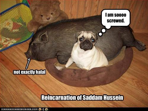 Reincarnation of Saddam Hussein I am soooo screwed. not exactly halal ------>