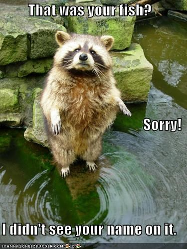 caption captioned fish marking mistake property raccoon that-was-yours - 3922160384
