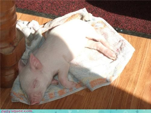 nap,pig,squee spree