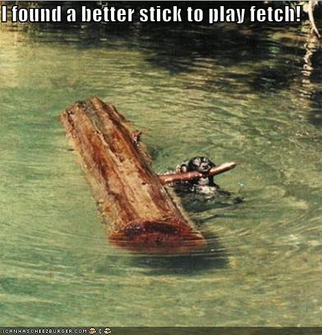 fetch log swimming wet dog whatbreed
