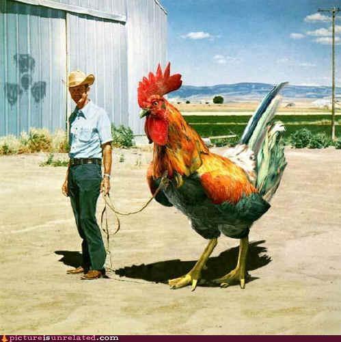 chicken farmer huge radiation wtf - 3922974464