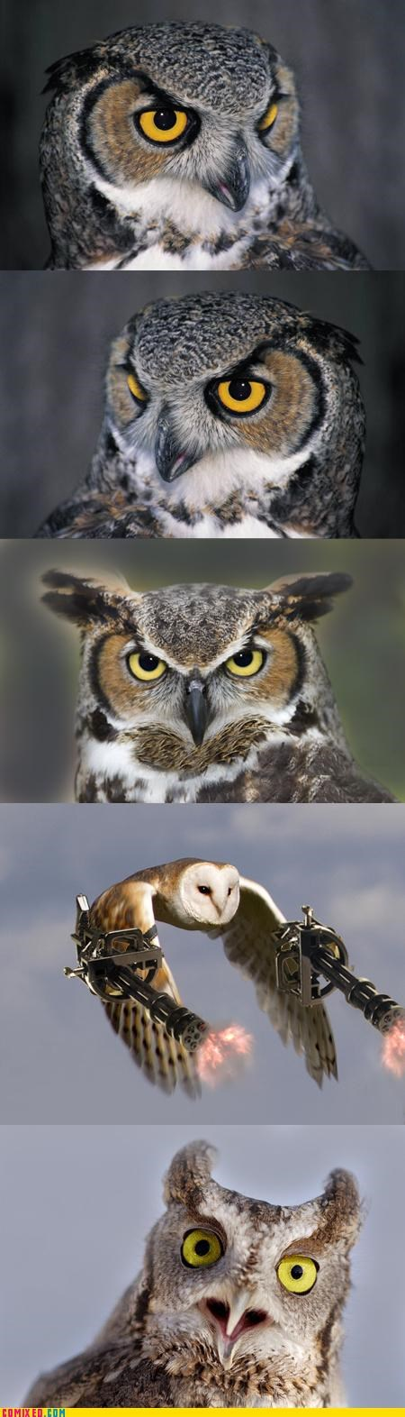 animals,awesome,brutal,destruction,guns,hybrid,nature,Owl