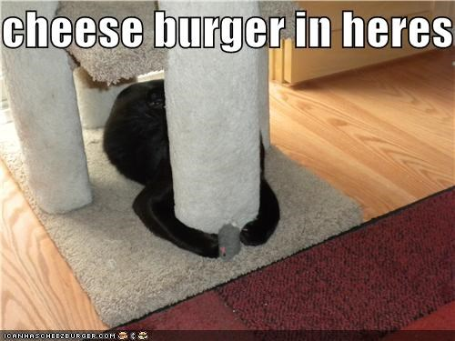 Cheezburger Image 3923166464