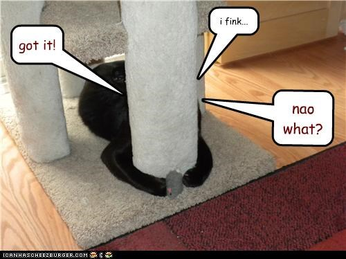 blindness,caption,captioned,cat,confusion,got it,now what,toy mouse