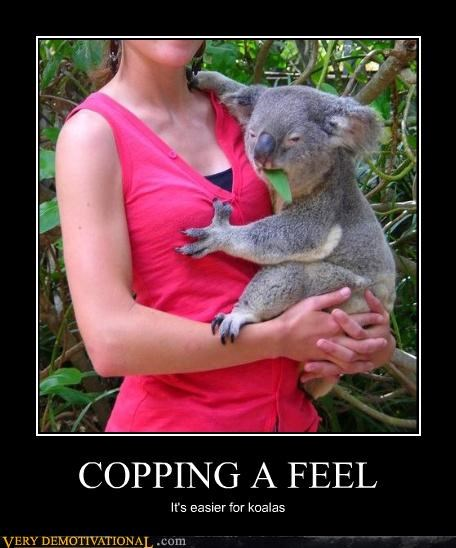 boobs copping a feel cute eucalyptus hilarious koalas spirt animal - 3923177472