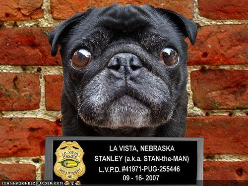 ceiling cat cheezburgers crime mug shot pug reward stolen wanted - 3923638272