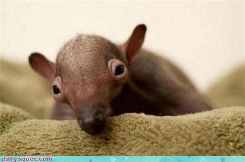 ant eater eyes face - 3923704064