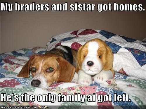 adopted beagle brothers family puppy Sad sister stuffed animal