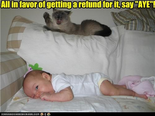aye,baby,caption,cat,couch,democracy,refund,vote