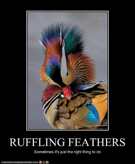 RUFFLING FEATHERS Sometimes it's just the right thing to do
